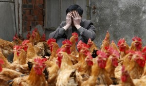 chicken-flu