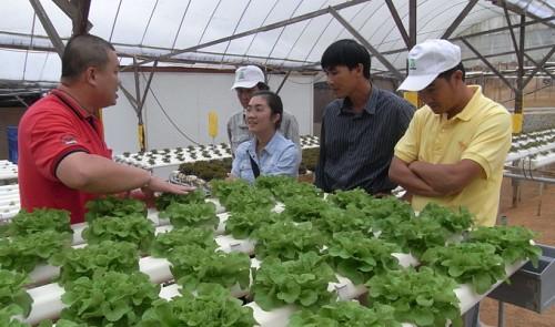 Vietnamese_Farming_1