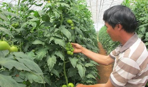 Vietnamese_Farming_2