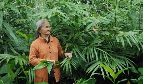 Vietnamese_Herbs_2