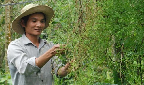 Vietnamese_Herbs_3